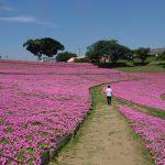 休日には家族でマザー牧場で花と動物に癒されよう!