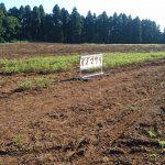 千葉県成田市の小山農園へ、さつまいも掘りと落花生掘りに行ってきた